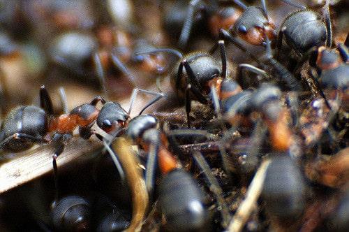 Empres de control de plagas - Hormigas