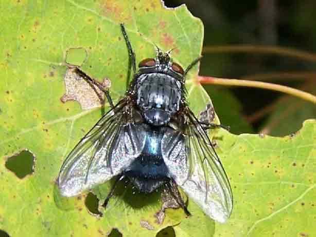 Control de plagas en primavera-mosca