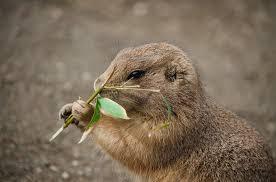 Control de plagas en primavera-topos