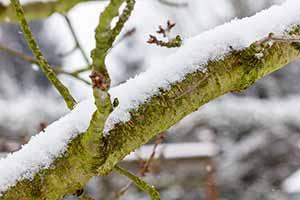 Mantenimiento de jardines en invierno