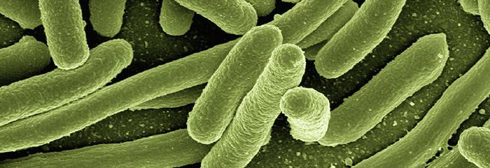 Desinsectación, desratización y desinfección
