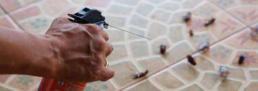 Plagas de cucarachas en casa