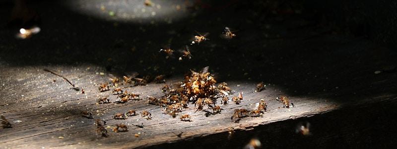 Plagas de termitas en verano