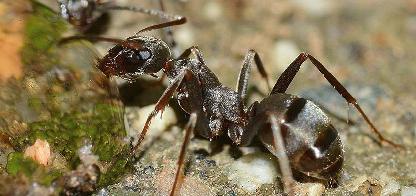 Plagas de hormigas en casav